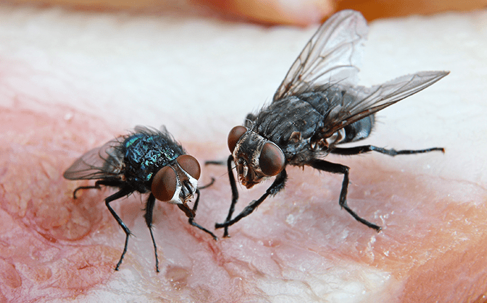 Three Easy Ways To Catch Fruit Flies In Your Home